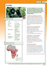 Gorilla - OroVerde