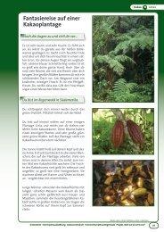 Fantasiereise auf einer Kakaoplantage - OroVerde