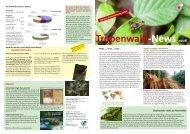 Tropenwald-News 2008 - OroVerde