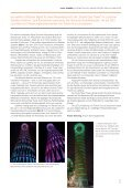 light sphere 3 | 2013 (2.2 MB) - Osram - Page 5