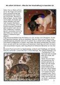 Dog Aktuell Das Hundemagazin - Seite 3