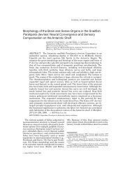 Morphology of the Brain and Sense Organs in the Snailfish ...