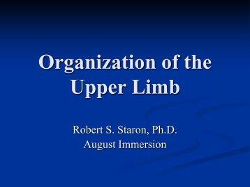 upper limb organization
