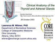 Clinical Anatomy of the Thyroid and Adrenal Glands