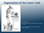 Introduction to the Lower Limb - Ohio University College of ...
