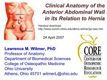 Clinical anatomy of the anterior abdominal wall in its relation to hernia.