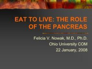 the role of the pancreas.