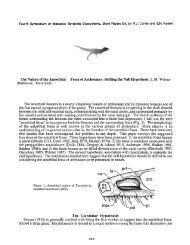 The Nature of the Antorbital Fossa of Archosaurs - Ohio University ...