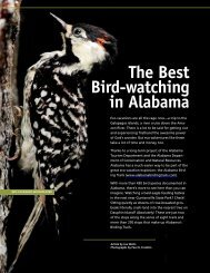 the best bird-watching in Alabama - Alabama Department of ...