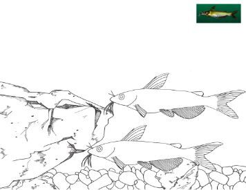95 ideas Catfish Coloring Page on freecoloringtoprintus