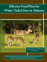 Effective Food Plots for White-Tailed Deer in Alabama - UF/IFAS ...