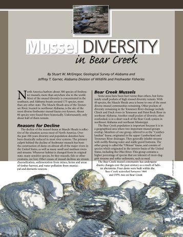 Mussel Diversity in Bear Creek