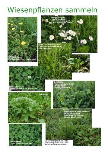 Wiesenpflanzen sammeln