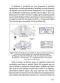 1. ESTUDO DOS TRIATOMÍNEOS 1.1 INTRODUÇÃO - PAHO/WHO - Page 7