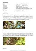 Lémuriens - WWF Panda Club - Page 2