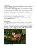 Der Ozelot - WWF Panda Club - Page 2
