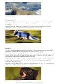 Polarfuchs - WWF Panda Club - Page 3