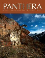 Download Panthera's 2012 Year in Review Report.