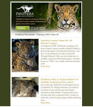 February 2011 - Panthera