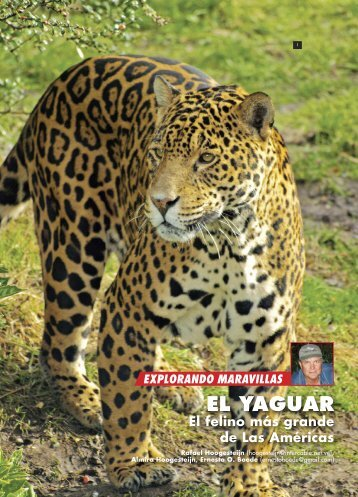 EL YAGUAR - Panthera