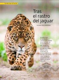 Tras el rastro del jaguar - Panthera
