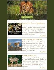 May 2013 Newsletter - Panthera