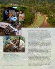 La InIcIatIva deL corredor deL Jaguar - Panthera - Page 6