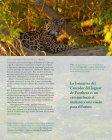 La InIcIatIva deL corredor deL Jaguar - Panthera - Page 7