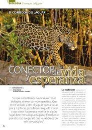 EL CORREDOR DEL JAGUAR - Panthera