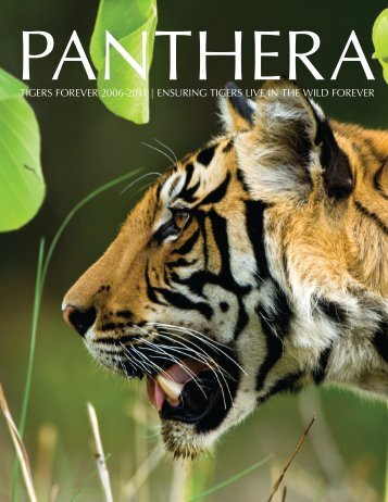 TIGERS FOREVER 2006-2011 | ENSURING TIGERS ... - Panthera