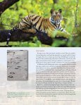 TIGERS FOREVER 2006-2011 | ENSURING TIGERS ... - Panthera - Page 6