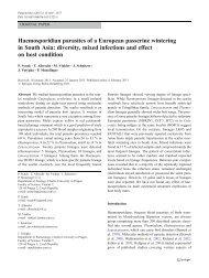 Haemosporidian parasites of a European passerine wintering in ...