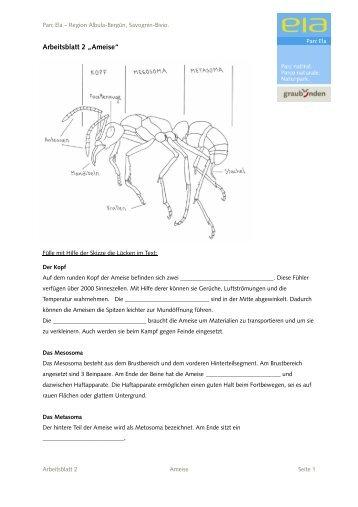 """Arbeitsblatt 2 """"Ameise"""" - Parc Ela"""