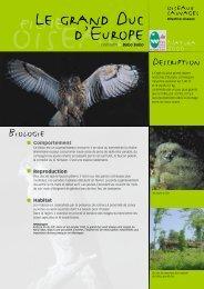 Le hibou grand duc - Parc naturel régional des Vosges du Nord