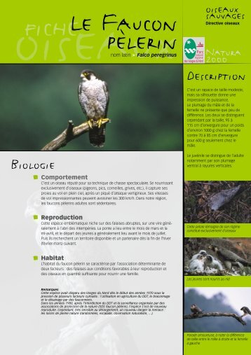 Le faucon pélerin - Parc naturel régional des Vosges du Nord