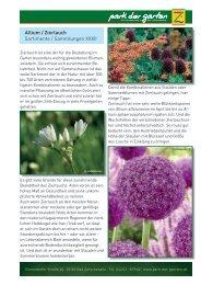 Allium / Zierlauch - Park der Gärten