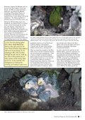 November 2004 - World Parrot Trust - Page 3