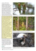 November 2004 - World Parrot Trust - Page 4
