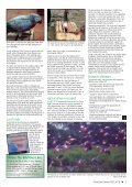 Parrots in the Wild - World Parrot Trust - Page 3