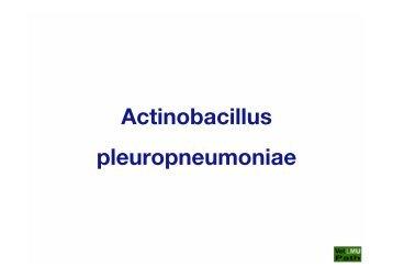 25_APP_(Actinobacillus_Pleuropneumoniae)