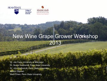 Regional wine industry overview and marketing grapes
