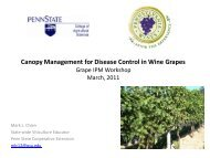 Canopy Management for Disease Control in Wine Grapes