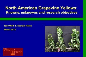 N American Grapevine Yellows - PA Wine Grape Growers Network