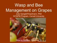 Wasp and Bee Management in Grapes - PA Wine Grape Network