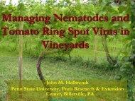 Managing Nematodes and Tomato Ring Spot Virus in Vineyards