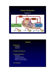 Cellular Respiration Outline