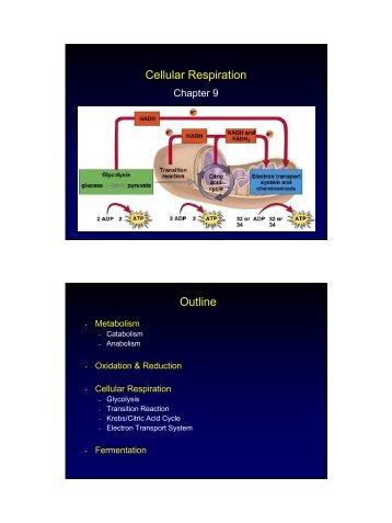 Cellular Respiration Outline