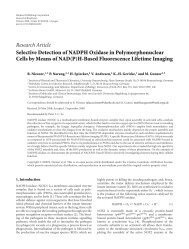 Research Article Selective Detection of NADPH Oxidase in ...