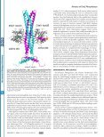 Kinetic Characterization of Catalysis by the Chemotaxis ... - Page 2