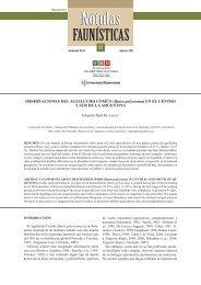 OBSERVACIONES DEL AGUILUCHO COMÚN (Buteo polyosoma) EN EL CENTRO Y SUR DE LA ARGENTINA